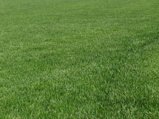 635774897357379173-09-14-2015-Lawn-picture