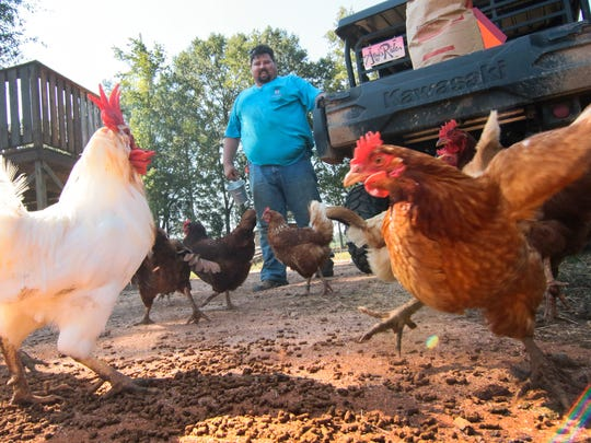 Brett Edelen of Berry Acres Farm in Anderson, watches his chickens eat between preparing for group tours at the play area of the farm.