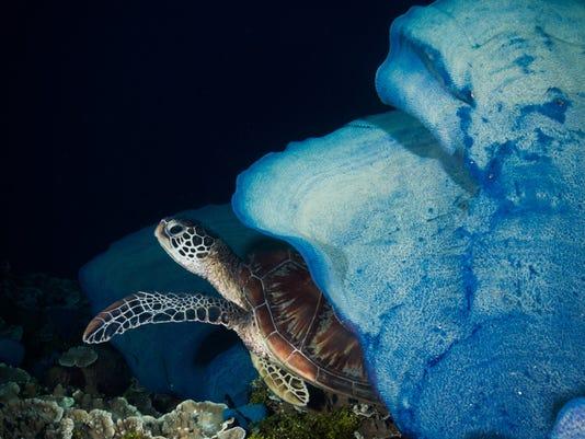 636663519538373330-underwater.jpg