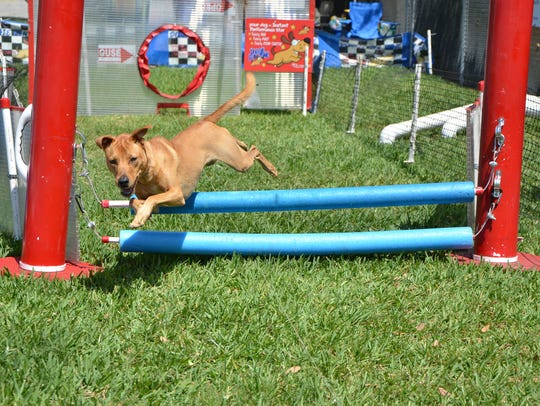 Dogs of all sizes and breeds have fun running in the
