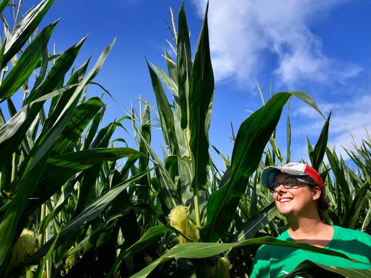 Amy Ladd, owner of Lucky Ladd Farm walks through a corn stalks she designed as an entirely Predators-themed 4-acre corn maze at Lucky Ladd this year Tuesday Sept. 19, 2017, in Eagleville, TN. (An earlier version of this photo information misidentified Lucky Ladd Farm's location.)