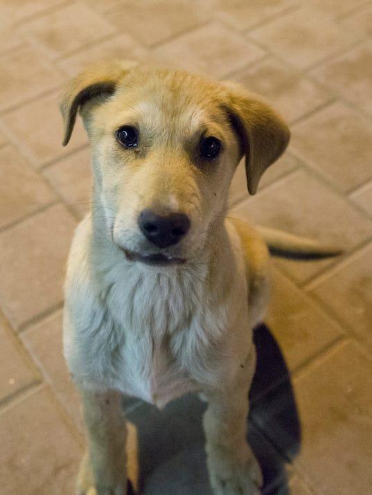 Adopt Sochi Dog