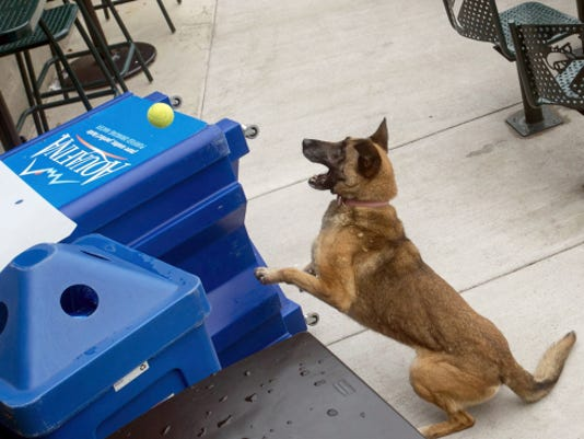 Tika is rewarded with her ball for finding 50 pounds of ammonium nitrate, a substance that can be used to make bombs, during training for K-9 teams in York.