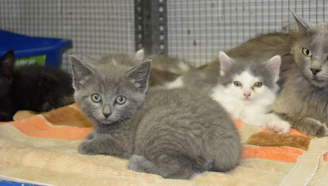 Sophie and her kittens are ready to find new homes. They're waiting for you at Crittenden Co. Animal Shelter.
