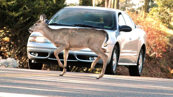 A motorist comes to a stop as he approaches a deer in the road. Mississippi law enforcement officials report deer-vehicle collisions are increasing.