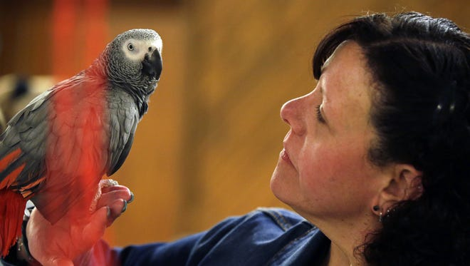 Amy Hammarlund of Waldo visits with Cedric as the Spring Bird Fair takes place April 29 at Lucky Dog'z Bar and Banquet Hall in Neenah. Birds of all shapes, sizes and colors were on display at the bird fair.