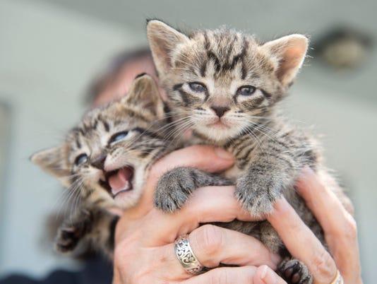 SOF SL Cats