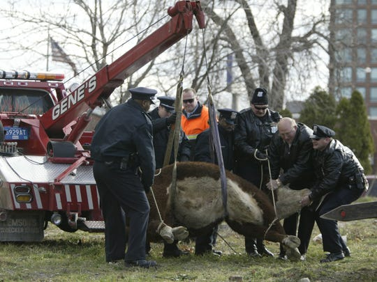 Story: Steer busts a move in Detroit