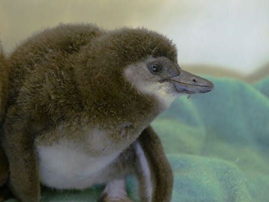 BabyPenguin2-Girl-preview-jpeg.jpg