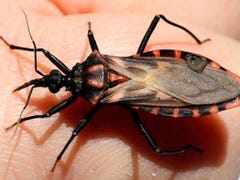 Watch out Texans! These are five of the most common pests to avoid this season