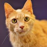 Rescue cat of the week: Eggnog (aka Alvis)