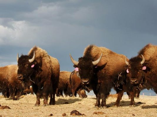 -Bison Relocation Supreme Court.jpg