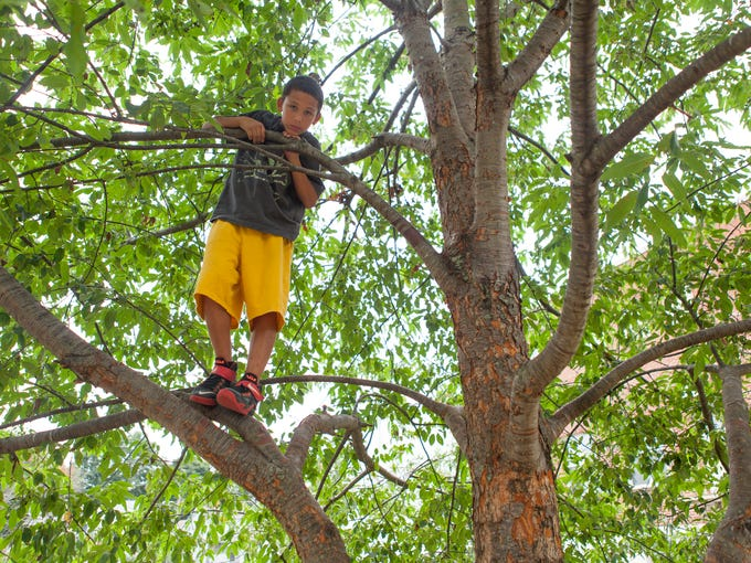 Nichols Nettles, 10, looks down from a tree after climbing