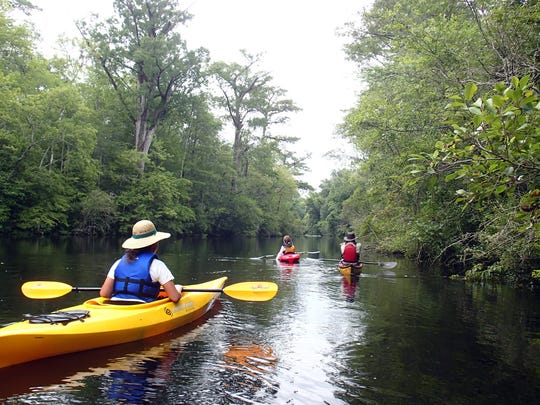 The New Jersey Division of Parks and Forestry has launched a kayaking eco-tour program that gives participants a close-up perspective on the ecosystems of Cheesequake State Park.