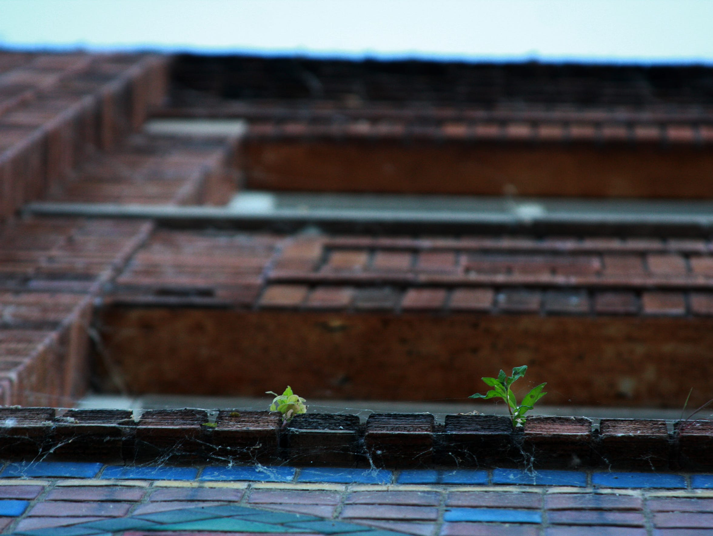 Several small plants sprout out of 180Urban's property