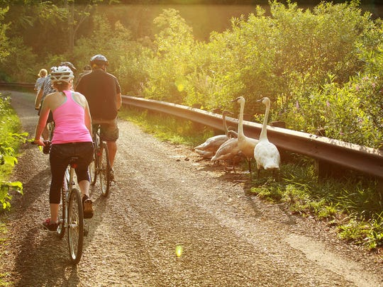A few swans stare at the bicyclists as they ride by during Tour de Zoo Thursday evening.