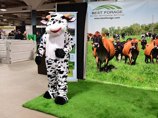 The Best Forages Holstein cow ambassador handed out candy to Farm Show attendees and posed against the backdrop photo of beautiful Jersey cows on pasture.