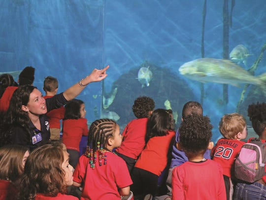 Maritime Aquarium educator Nicki Rosenfeld points out