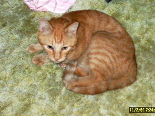 636567924466965826-T2-kitten.jpg