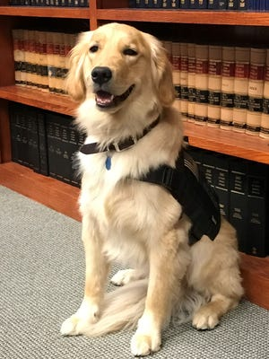 Visitors to the Ottawa County Prosecutor's Office are greeted by a new friendly and furry face. Her name is Helen, a victims' assistance service dog.