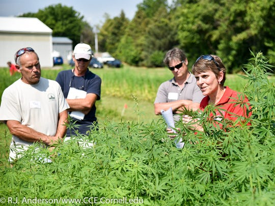 Christine Smart, of Cornell University's Hemp Research Team in the College of Agriculture and Life Sciences, talks to farmers about the experimental hemp crop being developed by the college during a presentation at the Geneva installation in August 2017.