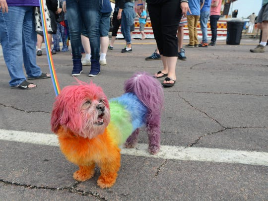 Poot AKA Skittles ready for PrideFest on Saturday 6/7/14.