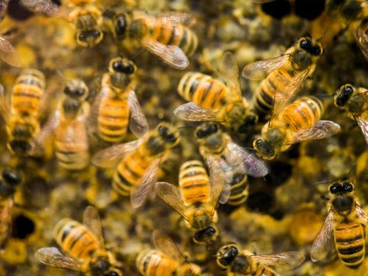 636034271833226472-WRTBrd-05-14-2015-Tribune-1-A009--2015-05-13-IMG-Bee-Deaths-2-3-1-VHAP9U9V-L611454163-IMG-Bee-Deaths-2-3-1-VHAP9U9V.jpg
