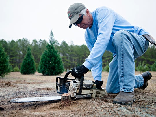 Frank Wadsworth cuts stumps to the ground at his Christmas