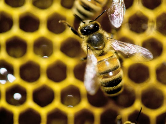 FILE - Bees continue to face challenges including diseases and habitat loss. Scientific research and educating the public are keys to maintaining a healthy bee population.