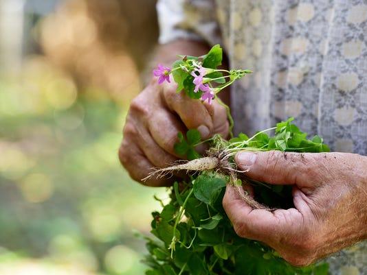 636626059501312619-Edible-Weeds-02.jpg