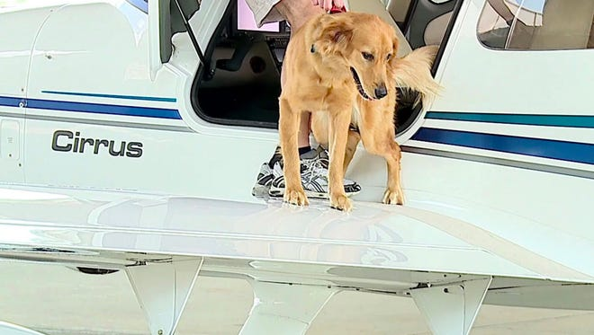 Paws N Pets delivers Reece to the airport in Zionsville.