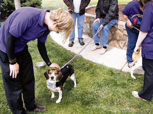 Dogs from the High Desert Humane Society were available for adoption at the Give Grandly! event on May 5 in Gough Park. The Humane Society recommends pets not ride in the back of pickup trucks unless they are in a secured pet transportation crate.