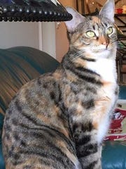 Abby is missing in the Forest Lakes community on Pine Ridge Road.