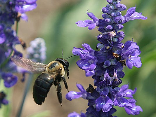 US-SCIENCE-CANADA-CLIMATE-ANIMAL-RESEARCH-AGRICULTURE-BEES-FILES