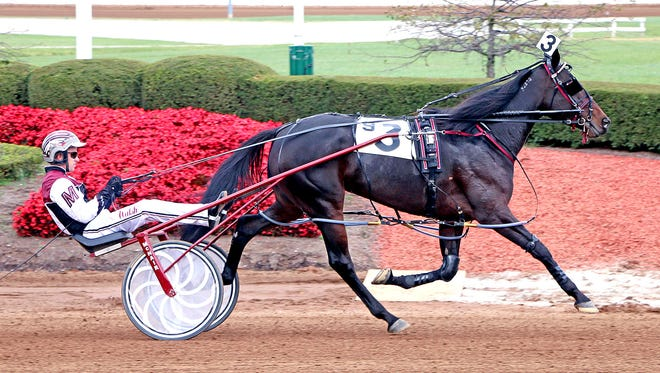 Precocious Beauty, shown competing at The Red Mile in Lexington.