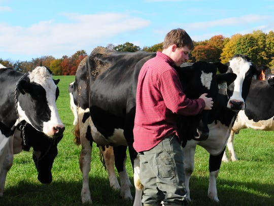 Andy Birch sees to some of his cows in the pasture.