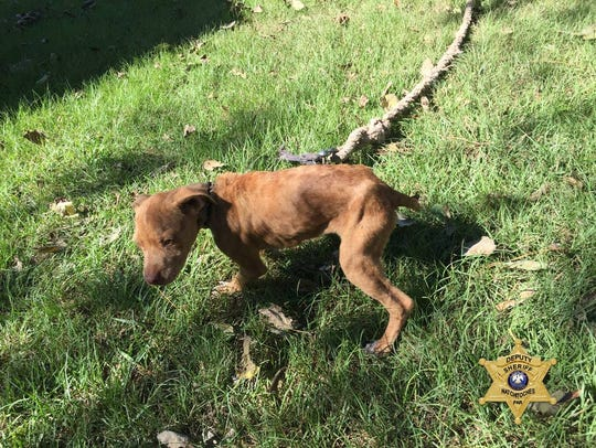 The nine dogs recovered from the Natchez home ranged