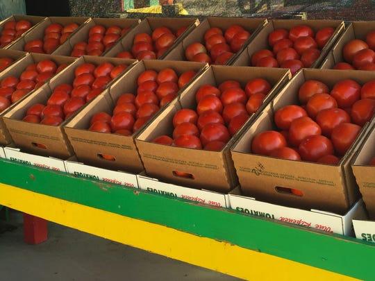 Florida tomatoes at Ritchey's Produce