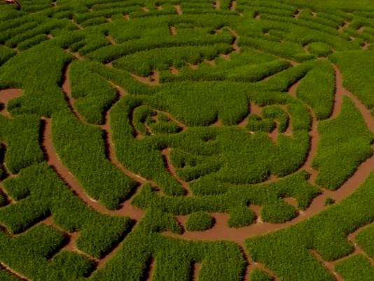 La Union Corn Maze