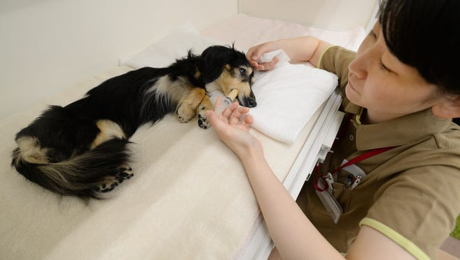 Dogs can get the flu, too.