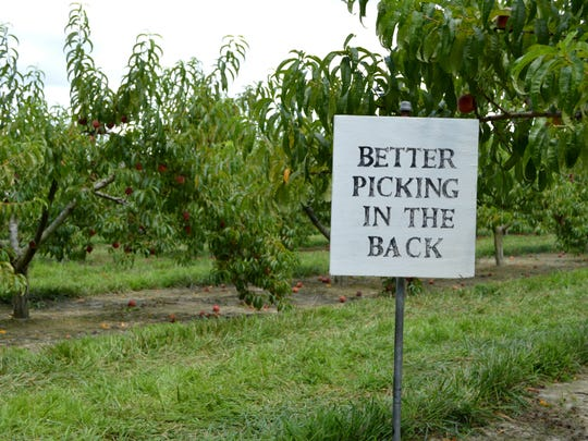 Bennett Orchards is Frankford is open for the season, although a bad freeze in spring questioned the farm's crops.