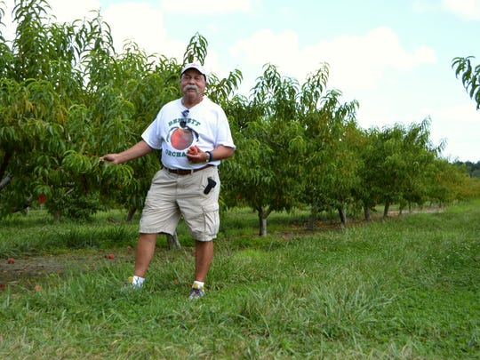 Ray Danieli stands guard, hard at work, at Bennett Orchards.