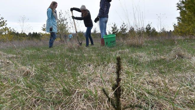 Gibraltar High School students plant white spruce seedlings last year in the Schoenbrunn Nature Conservancy near Ellison Bay.