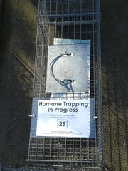 Cheryl Phillips uses a combination of her own traps and traps from the Humane Society of Huron Valley.