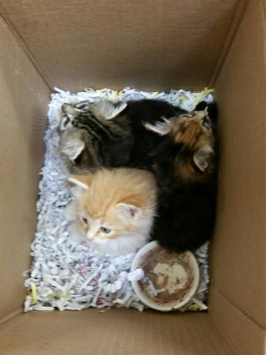 Kittens found at NMSU photo