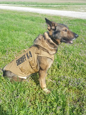 Aries, the Henderson County Sheriff's Department's K-9 sports a protective vest