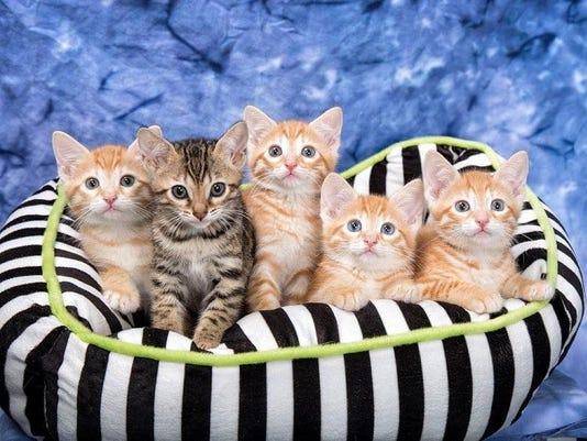 KittensN1