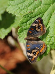 Photo courtesy of Turtle Bay Exploration Park 'Wings of Summer: Butterflies!' at Turtle Bay Exploration Park in Redding.