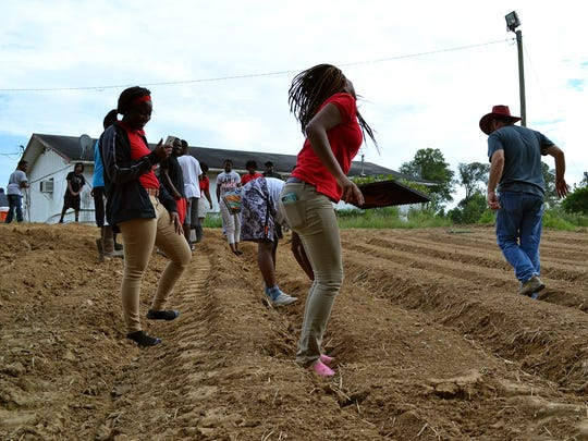 Holmes County high school students in the Mileston youth-in-agriculture program plant cauliflower on a field behind the Mileston Co-op in September, 2017.