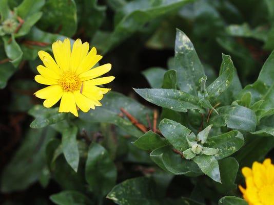 SAL1223-LW Herbs